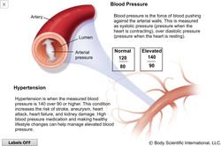 Blood Pressure & Hypertension
