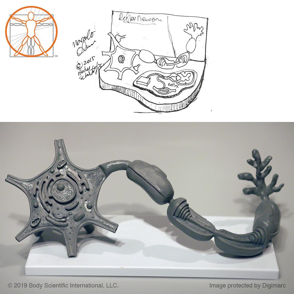 Sketch to Final (Wax model by Liana Bauman)