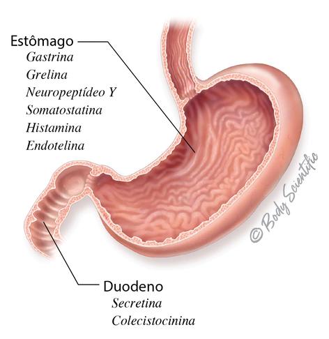 Estômago e Duodeno