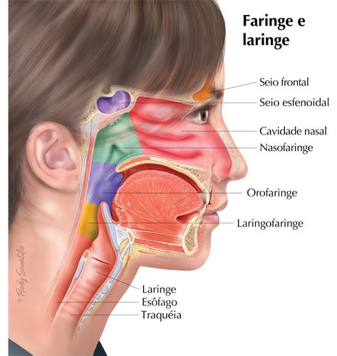 Faringe e Laringe