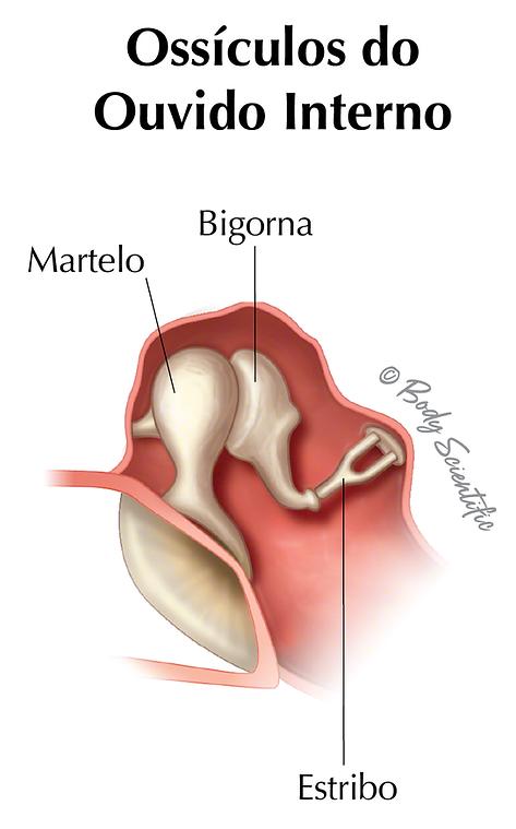 Ossículos do Ouvido Interno