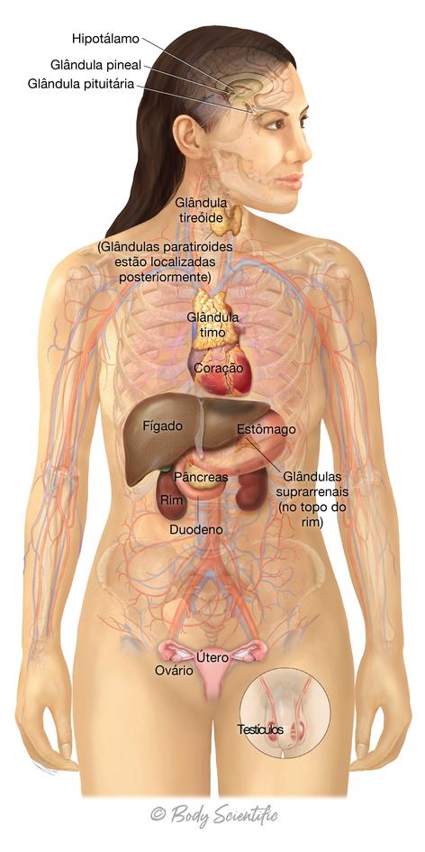 Visão Geral do Sistema Endócrino