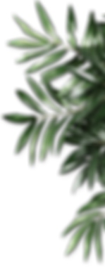 kisspng-leaf-be-natural-organics-android