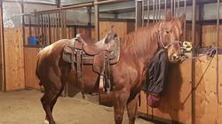 Loving my cool little horse!