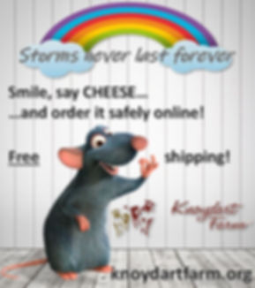 Storms never last forever with mouse.JPG
