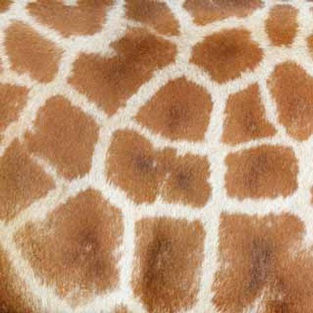 Giraffe (ELLA & VIV-Animal Kingdom)