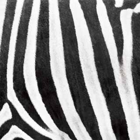 Zebra (ELLA & VIV-Animal Kingdom)