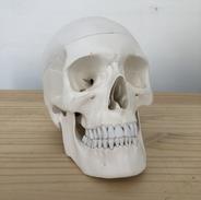 Big skull 600€