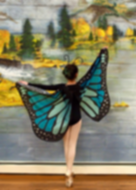 butterfly%20pic_edited.png