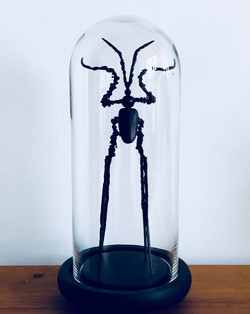 Mutant insect