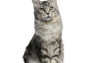 TIPS FOR MOVING AN OUTDOOR CAT