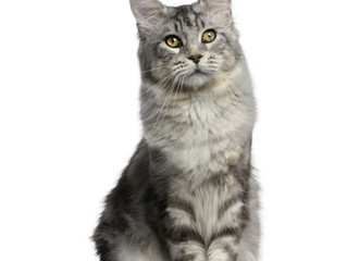 3 consejos para transportar a tu gato de manera segura y feliz!