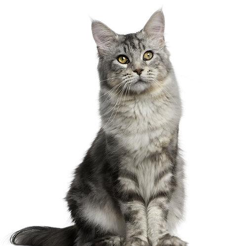 BARF Plan Standard Katze