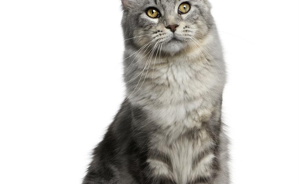 Diplom Katzen Tierheilpraktiker