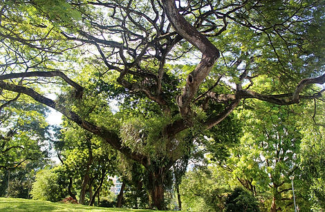Tree-pruning-5-1.jpg