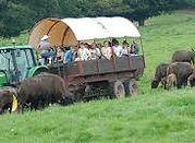 ferme des bisons.jpg