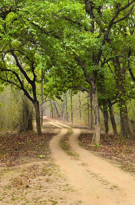 JUNGLE TRAIL Bandhavgarh.jpg