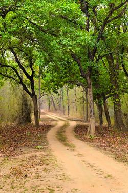 JUNGLE TRAIL Bandhavgarh.jpg