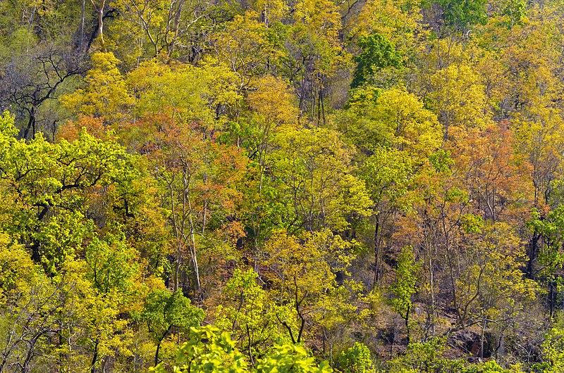 Colours of forest Bandhavgarh.jpg