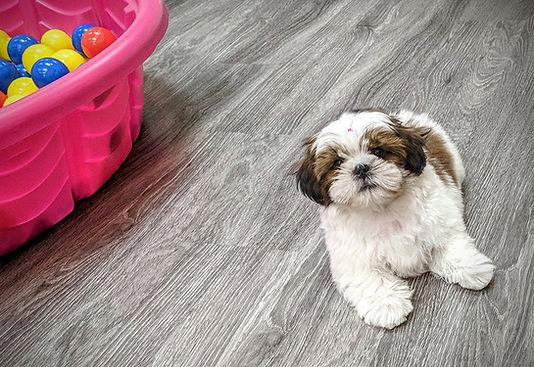 nana_puppy.jpg