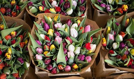 Tulipe, P