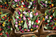 10月から季節のお花がお出迎えします!