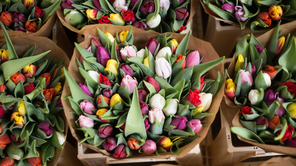 Bouquets of Tulips.