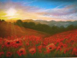 In Flanders Fields the poppies blow....jpg