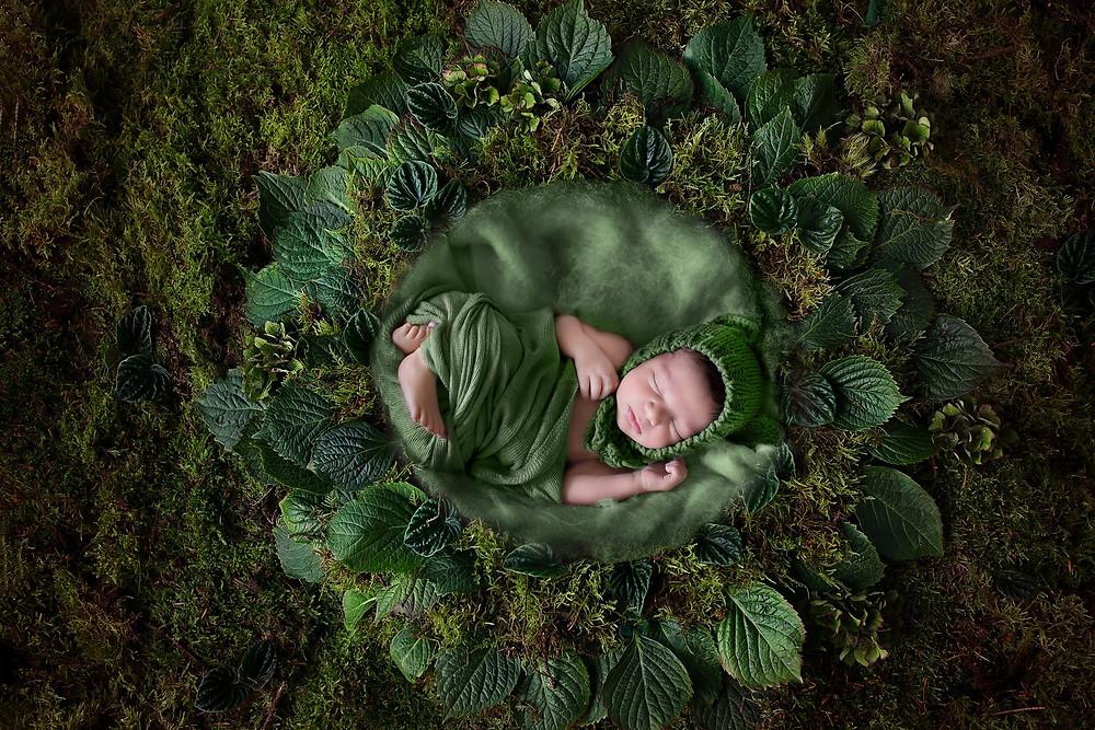 Auburn, Wa Newborn Photographer