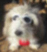 Desert Meadows Dog.jpg