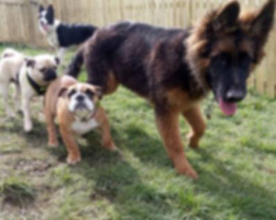 Fun Fur Dogs Services