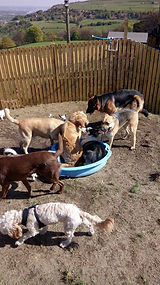 Dogs in paddling pool at Fun Fur Dogs