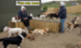 Fun Fur Dogs Paddock