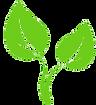 plante verte.png