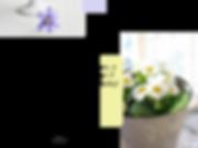 Febbirthflowerweb2.png