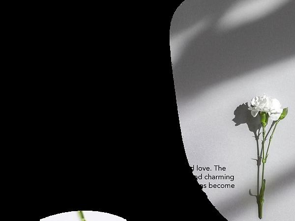aqrbirthflowerjanuary.png