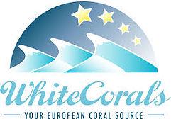 whitecorals.jpg