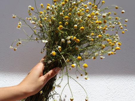 DIY : Fleurs séchées