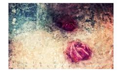 Roses au bain