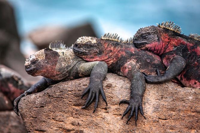Endemic Species of Galapagos