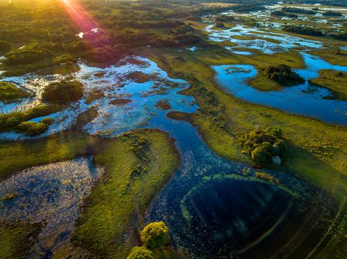 Wetlands of Pantanal