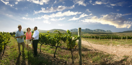 Savouring the wine region