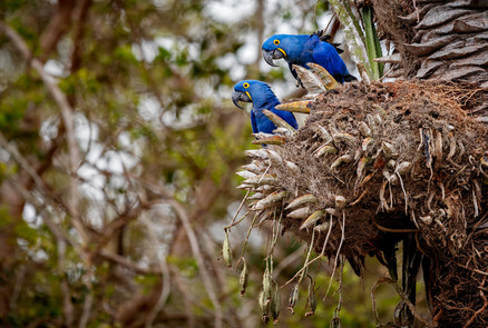 Birdwatchers' Paradise