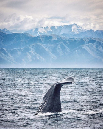 Spot Majestic Whales Just Off the Coast