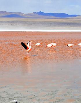flamingo-1490844_1920.jpg