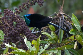 Amazing Bird Species
