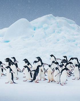 Quark Expeditions_Antarctic Express_Fly