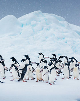 Quark Expeditions_Antarctic Express_Fly