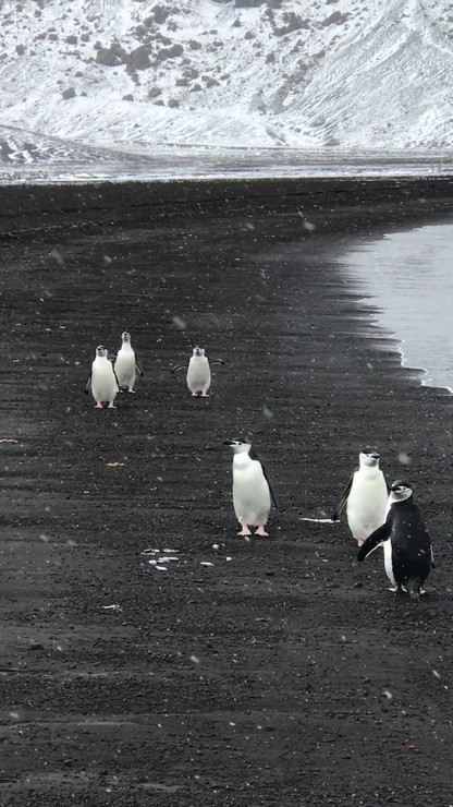 Video by Jessica on Deception Island