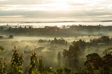Scenery in Kibale National Park